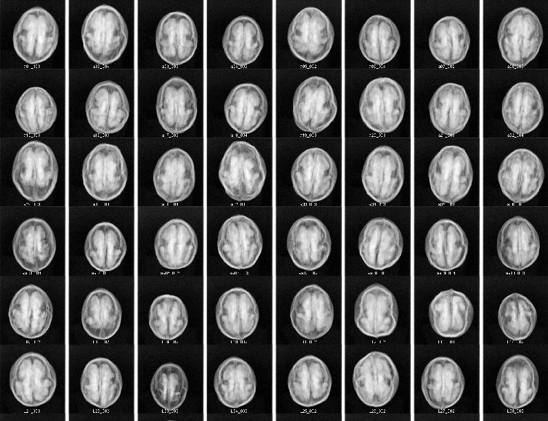x-ray-sorting-walnuts-1